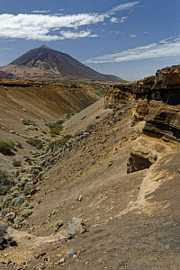 View towards El Teide volcano, Europe's highest mountain, along an eroded gulley though a landscape of lava, volcanic ash and scrubby bushes, Tenerife, Canary Islands, August.  -  Nick Upton
