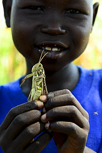 A child holding a migratory locust ,he has caught, South of Chad. September 2019.  -  Enrique Lopez-Tapia