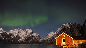 Timelapse of the Aurora Borealis above a rorbu, a traditional Norwegian seasonal house used by fishermen, Lofoten Islands, Norway, January 2020.  -  Erlend Haarberg