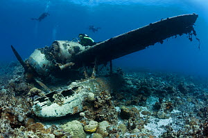 Scuba diver examines Jake Seaplane, sank in World War II. Palau, Pacific Ocean.  Model released.  -  Brandon Cole