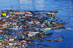 Plastics floating in marina at tourist port of Hurghada. Egypt, Red Sea.  -  Brandon Cole