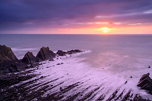 Hartland Quay at sunset, showing an eroded synclinal fold exposed Carboniferous age sandstones and shales. Hartland, Devon, UK. February.  -  Ross Hoddinott