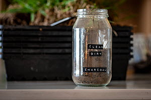 Dirt collected from Goongerah in a glass jar. This will be given to three orphaned and rescued bare-nosed wombat (Vombatus ursinus) to snuffle and digest as part of their care as it contains microbes...  -  Doug Gimesy