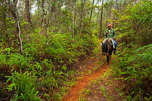 Horse-riding ranger in Humboldt National Park, Cuba. March 2019.  -  Bruno D'Amicis