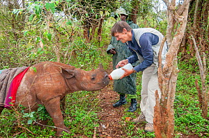 Black rhino (Diceros bicornis) orphan aged 18 months being bottle-fed by photographer Tui De Roy. Tui originally discovered the poached mother in bushes and alerted Game Managers to the orphaned calf...  -  Tui De Roy