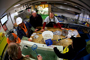 Scientists, volunteers and ship's crew observing krill collected onboard the icebreaker Aurora Australis during the 2014-15 marine science voyage, Southern Ocean  -  Fred Olivier