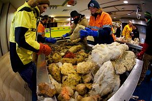 Group of scientists and volunteers sorting the specimens collected during a deep benthic trawl off the coast of Antarctica, Southern Ocean, 2015 February 2015.  -  Fred Olivier