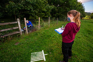A volunteer records data while a vaccinator inoculates a European badger (Meles meles) against TB. North Somerset, UK. Badger vaccination programmes are being carried out in England as a means of cont...  -  Neil Aldridge