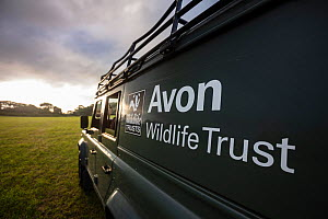 An Avon Wildlife Trust Land Rover on farmland at dawn during a programme to vaccinate European badgers (Meles meles) against TB in North Somerset, UK. Badger vaccination programmes are being carried o...  -  Neil Aldridge
