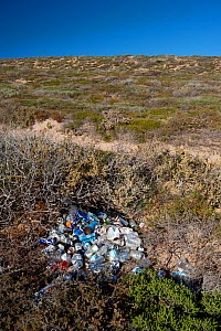 Litter of cans and plastic bottles illegally dumped in Shelter Bay. Edel Land National Park (proposed), Shark Bay, Western Australia. October 2019.  -  Bert Willaert