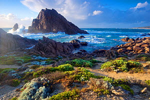 Sugarloaf Rock viewed fom coast of Leeuwin-Naturaliste National Park. The granite outcrop is the southernmost regular breeding site of the Red-tailed tropicbird (Phaethon rubricauda). Western Australi...  -  Bert Willaert