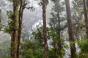Tropical mountainous rainforest cloudforest in the highlands, Los Quetzales National Park, Rio Savegre valley, Costa Rica  -  David Pattyn