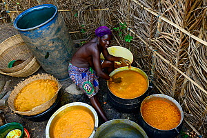 Holi tribeswoman preparing and processing Palm oil, an oil widely used throughout the country. Benin, 2020.  -  Enrique Lopez-Tapia