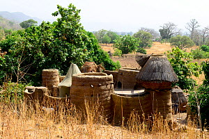 Takyenta mud tower house within Tammari village, made from mud, branches and straw. Koutammakou, the Land of the Batammariba, Togo, 2020.  -  Enrique Lopez-Tapia