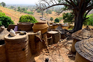Village of the Tammari people with takyenta mud tower houses made from mud, branches and straw. Koutammakou, the Land of the Batammariba, Togo, 2020.  -  Enrique Lopez-Tapia