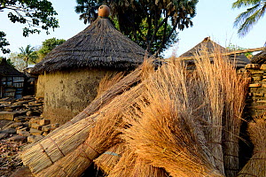Pile of thatching material beside traditional clay houses in Taneka village. Benin, 2020.  -  Enrique Lopez-Tapia