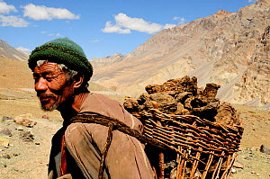 Ladakhi man carrying basket on back filled with Yak manure, mountains in background. Manure to be used as fire fuel. Photang Valley, Ladakh, India. September 2011.  -  Enrique Lopez-Tapia