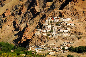 Karsha Gompa Buddhist monastery on mountainside at 3650m in altitude, founded in the 10th Century. Padum Valley, Zanskar, Ladakh, India. 2011.  -  Enrique Lopez-Tapia