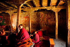 Lama and monks in religious ceremony inside Karsha Gompa Buddhist monastery, founded in the 10th Century. At 3650m altitude. Padum Valley, Zanskar, Ladakh, India. 2011.  -  Enrique Lopez-Tapia