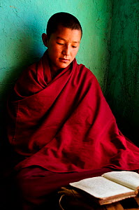 Young novice studying, portrait. In small school of the Karsha Gompa, a Buddhist monastery at 3650m altitude founded in the 10th Century. Padum Valley, Zanskar, Ladakh, India. 2011.  -  Enrique Lopez-Tapia