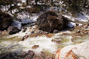 Rocks and boulders in river, snow on riverbank. North Sikkim, India. April 2019.  -  Ashish & Shanthi Chandola