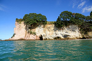Cliff with small caves, trees growing on clifftop, view from across sea. Cathedral Cove Marine Reserve, North Island, New Zealand. April 2017.  -  Ashish & Shanthi Chandola