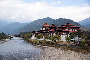 Punakha Dzong beside river, forested hills in background. Building is the administrative centre of Punakha District, Bhutan. February 2019.  -  Ashish & Shanthi Chandola