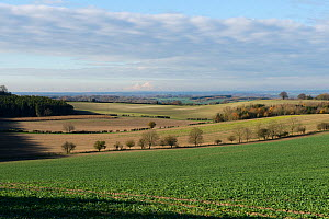 Downland field of young oilseed rape crop on a bright winter day with long views of Berkshire and Wiltshire scenery, England, UK. November.  -  Nigel Cattlin