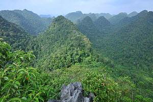 Overview of rainforest in Cao Vit Gibbon Species & Habitat Conservation Area, Trung Khanh district, Cao Bang province, Vietnam. EDITORIAL USE ONLY. All uses require clearance.  -  Nguyen Van Truong / Fauna & Flora International