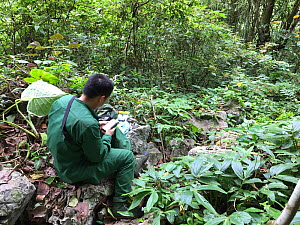GMT (Gibbon Monitoring Team) engaged in gibbon monitoring activity. Cao vit gibbon Species & Habitat Conservation Area, Trung Khanh district, Cao Bang province, Vietnam.  Image suitable for small rep...  -  Hoang Van Tuan / Fauna & Flora International