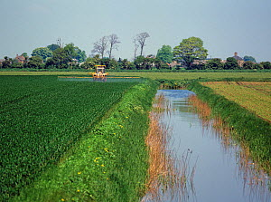 Tractor and sprayer spraying a wheat crop near a large l drainage canal on Cambridgeshire fenland in spring. England, UK.  -  Nigel Cattlin