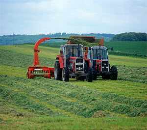 Massey Ferguson tractors and forager collecting cut grass in rows and discharging to a trailer for silage making, Wiltshire, England, UK.  -  Nigel Cattlin