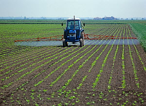 Ford tractor, mounted boom sprayer spraying rows of early post-emergence sugar beet crop, Cambridgeshire, England, UK. May  -  Nigel Cattlin