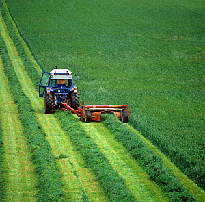 Ford tractor with Vicon Olympus mower mowing lush ryegrass ley in rows to forage for silage, Berkshire, England, UK.  -  Nigel Cattlin