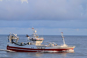 Danish pelagic fishing vessel 'Tina Jeanette' with heavy catch of herring onboard. North Sea. August 2019.  -  Philip  Stephen