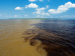The meeting of the Rio Negro (black water) and the Amazon river near Manaus, Amazon Basin Brazil.  -  Konrad Wothe