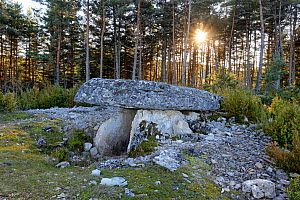 Dolmen in forest at sunset, Grands Causses Regional Natural Park, Lozere, France, February  -  Pascal Pittorino