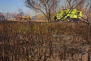Firefighters working after a dense cattail marsh at the Sonny Bono Salton Sea National Wildlife Refuge was burned for habitat management to benefit the endangered Yuma clapper rail. The Yuma clapper r...  -  Jenny E. Ross