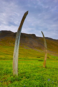 Whale bones placed in a ritual formation by indigenous people at the ancient sacred site currently known as 'Whalebone Alley' on Yttygran Island in the Bering Sea, Chukotka, Russia.  -  Jenny E. Ross
