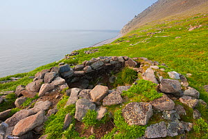 The remains of a stone food cache at an ancient Chukchi village site on Cape Dezhnev in the Bering Strait. Cape Dezhnev, Chukotka, Siberia, Russia, Bering Strait.  -  Jenny E. Ross