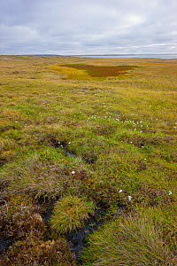 Arctic tundra with frost-wedging features caused by repeated freeze-thaw processes in soil, as well as slumping and and surface water accumulation from thawing permafrost. Amguema River Estuary Region...  -  Jenny E. Ross