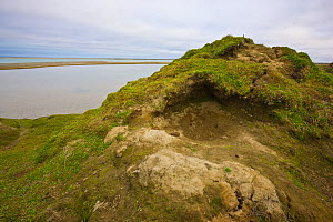 Den of a brown bear (Ursus arctos beringianus) on a hill above the Amguema River estuary, Chukotka, Siberia, Russia. When curled up in this bed, a bear would be protected from the prevailing winds com...  -  Jenny E. Ross