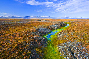Arctic tundra with frost-wedging features caused by repeated freeze-thaw processes in rocky soil, and surface water accumulation from melting permafrost. Wrangel Island, Siberian Arctic, Chukchi Sea,...  -  Jenny E. Ross