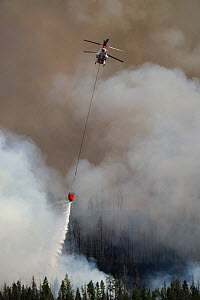 CH-47 helic0poter dropping water on the Lava Mountain Fire in Shoshone National Forest, Wyoming, USA, July 2016  -  Jeff Vanuga