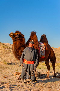 A herder with Bactrian camel, in the Hongoryn Els sand dunes. Gobi Desert in southern Mongolia.  -  Jeff Foott