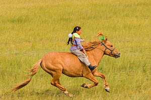 Young girl Horse racer at Darhat Valley naadam festival. Mongolia.  -  Jeff Foott