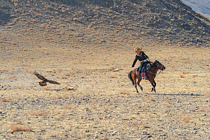 The Chargai competition. The hunter drags a fox skin behind the horse for the Golden Eagle to catch. Eagle Hunters Festival, Altai Mountains, Bayan-Ulgii, Western Mongolia.  -  Jeff Foott