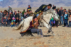 Tug-of -war game, ( Kukbar game) at the Eagle Hunters festival near Ulgii, Western Mongolia.  -  Jeff Foott