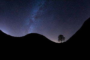 Sycamore Gap silhouetted at night, Milky Way above. Hadrian's Wall, Northumberland National Park, Northumberland, England, UK. December 2018.  -  Guy Edwardes