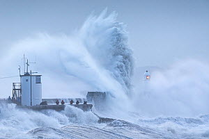 Storm Ciara battering Porthcawl Lighthouse and coastline, people watching waves from sea wall. Mid Glamorgan, Wales, UK. February 2020.  -  Guy Edwardes